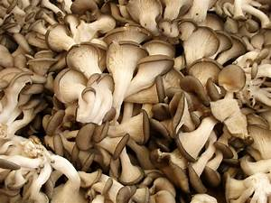 How To   Grow Your Own Oyster Mushrooms