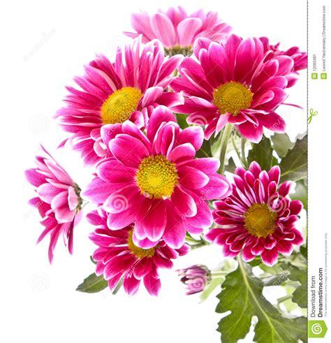 Pink Flowers In Bloom Stock Image Image Of Blooming