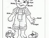 Coloring Parts Pages Preschool Human Worksheets Clipart Preschoolers Worksheet Animal Printables Toddlers Theme Sheets Activities Kindergarten Printable Pre Ages Pieces sketch template