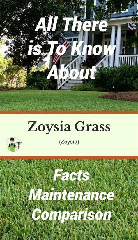 grass zoysia season progardentips creeping