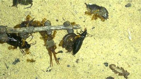 was fressen ameisen ameisen fressen insekten