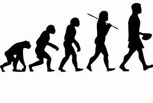Evolution Of Humans For Kids   www.imgkid.com - The Image ...