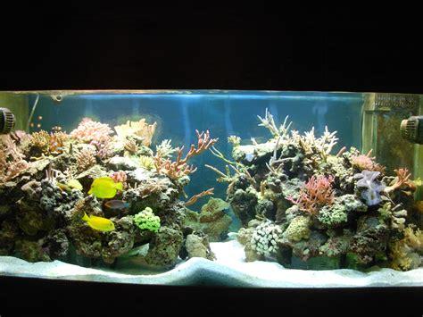 d 233 cor aquarium recifal