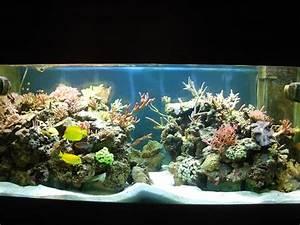 Idee Decoration Aquarium : photo id e d co aquarium recifal ~ Melissatoandfro.com Idées de Décoration