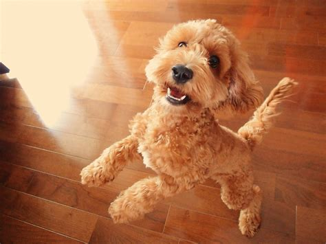The  Cutest Mixed Breed Dogs Dog Reference