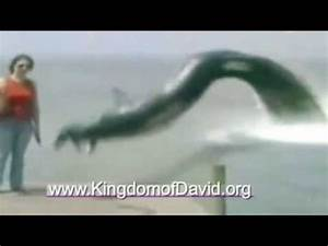 Leviathan caught on tape eating dog. NOT FAKE!! - YouTube