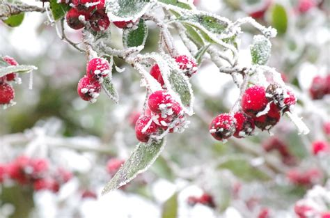 winter garden plants how to protect landscape in the winter real detroit weekly