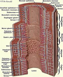 94 Best Images About A U0026p 5 Stomach  U0026 Kidneys On Pinterest