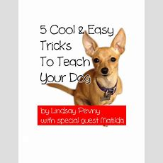 5 Cool & Easy Tricks To Teach Your Dog