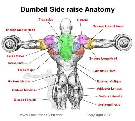 Shoulder Pain Incline Bench by Freefitnessguru Dumbell Side Raise Anatomy
