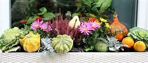 Balkonbepflanzung Im Herbst : mischung aus lebhaften terrasse herbst blumen und k rbis stockfoto colourbox ~ Markanthonyermac.com Haus und Dekorationen