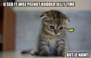 cat memes cat memes damn cool pictures