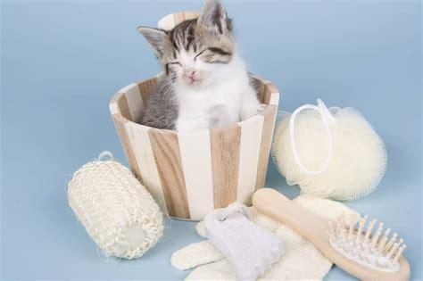 bassine pour bain de si鑒e 5 conseils pour baigner sans problème