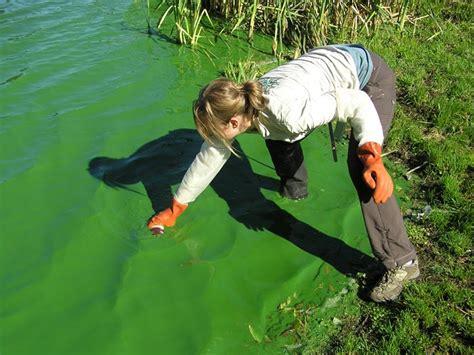 algae gallery