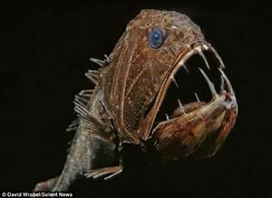 Monsters of the deep revealed! Sealife that live in almost ...