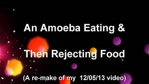Amoeba Eating And Rejecting Food