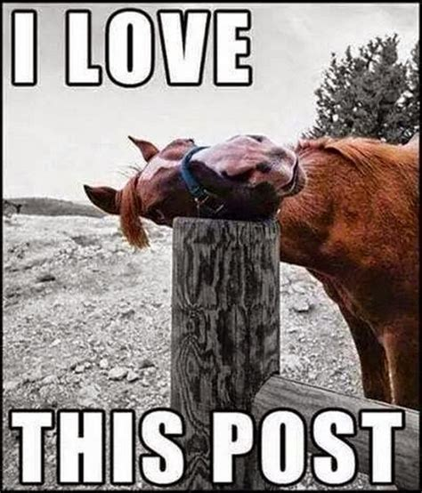 Post Meme - 25 very funny horse meme pictures of all the time