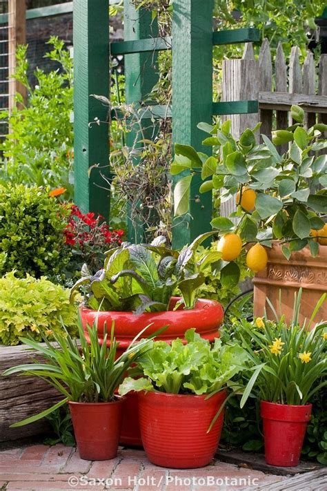 46 Best Images About Edible Container Gardens On Pinterest