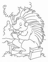Porcupine Coloring Pages Listening Music Drawing Sheets Line Colouring Bestcoloringpagesforkids Worksheets Printable Porcupines Crested Getdrawings Getcolorings sketch template