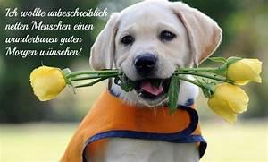 Whatsapp Guten Morgen Bilder Kostenlos : lustige tiere bilder auf besten witzige tierbilder ~ Frokenaadalensverden.com Haus und Dekorationen