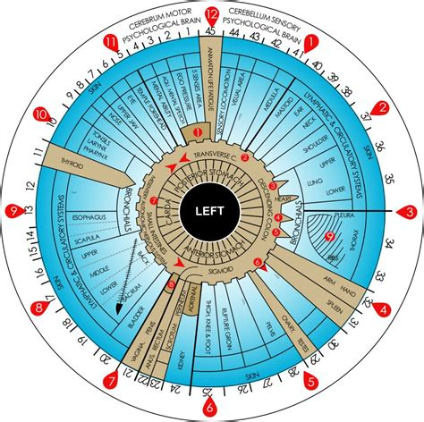 change     iridology chart left eye