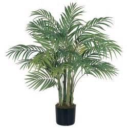 комнатные цветы пальмы с картинками