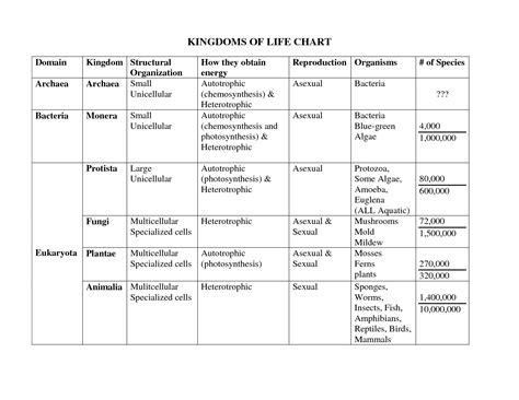 51 Kingdom Classification Worksheet, Kingdom Classification Worksheet Answer Key Www Artgumboorg
