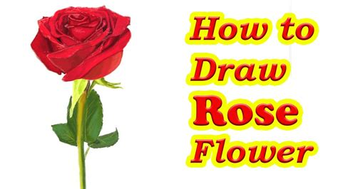 how to a flower drawing rose flowers how to draw a rose flower stepstep