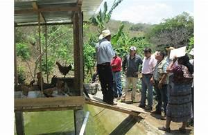 Fao Visita Proyecto De Granjas Agro Acu U00edcolas En Guatemala