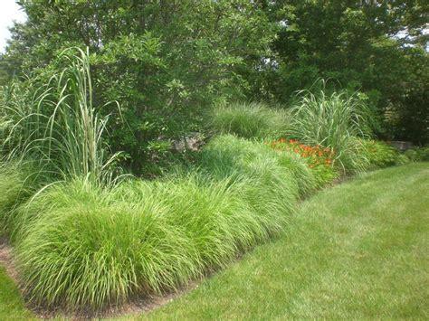grass for landscaping landscape grasses constant modifications steve snedeker s landscaping and gardening blog
