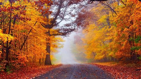 Fog In The Autumn Forest Hd Desktop Wallpaper