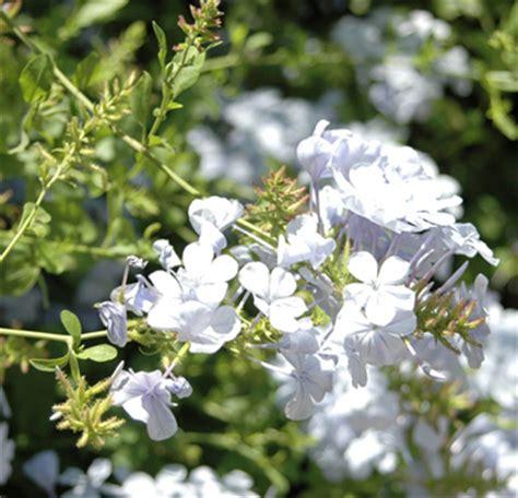 Plants For An East Facing Garden  Ehow Uk