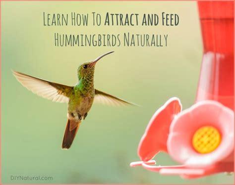 hummingbird food recipe no boil besto blog