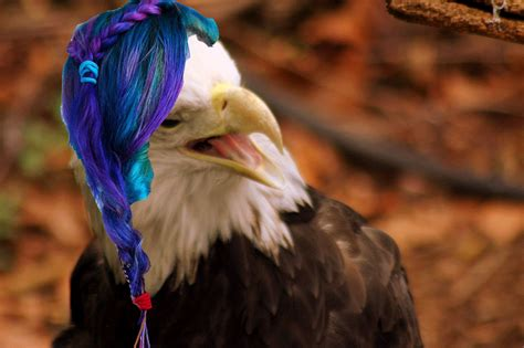 bald eagles wearing wigs