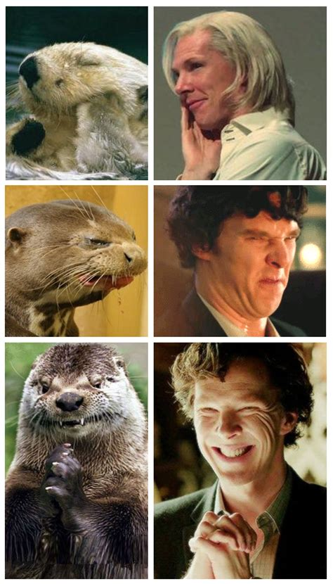 Benedict Cumberbatch Otter Meme - exhibit j whe the heck makes these in their spare time benedict cumberbatch is an otter