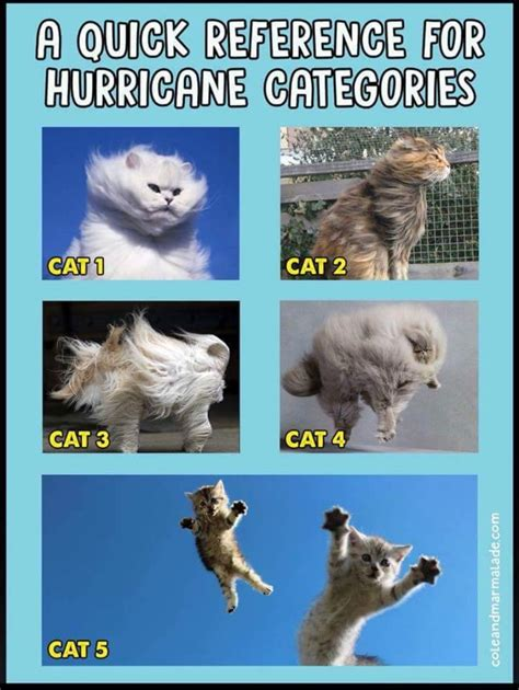 Hurricane Is A Tropical Cyclone, Known As Typhoon In East