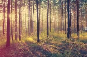 Mural Wald Sonnenuntergang Herbst Walldesign56 Wandtattoos Fototapete Poster
