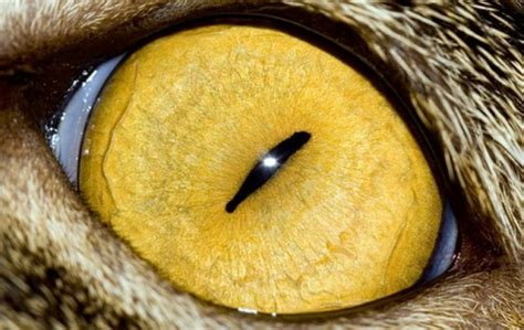 macro photography  animal eyes