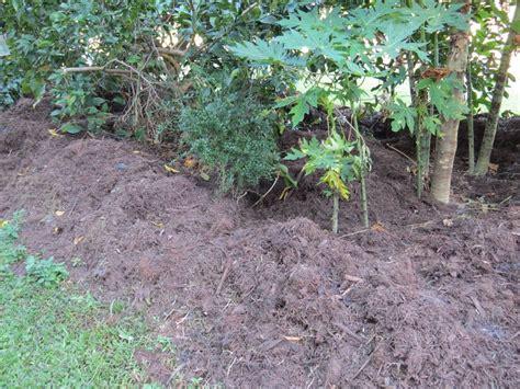 mulching your garden mulching your garden gardening mulch