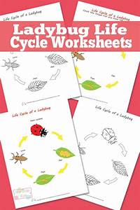 Ladybug Life Cycle Worksheet