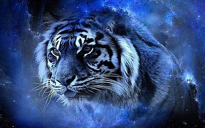 Cool Tiger Backgrounds Animals Wallpapers