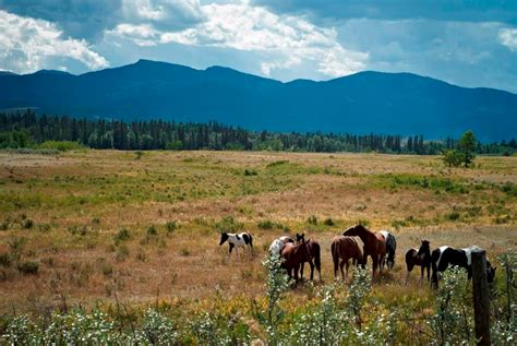 Alberta's natural ecosystems are shrinking faster than the ...
