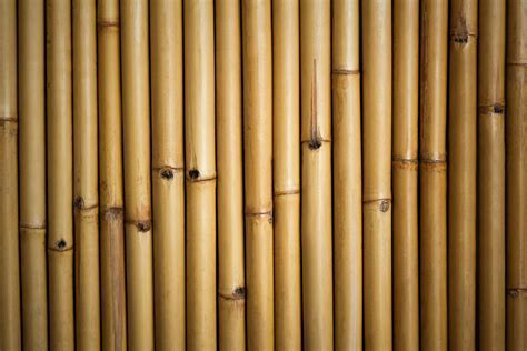 5 Ways to Build With Bamboo   Pro.com Blog