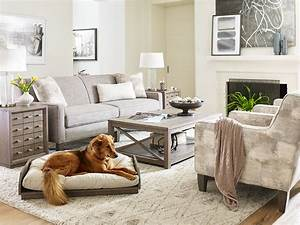 Rachael ray cat food reference idea for modern living room for Dog room furniture
