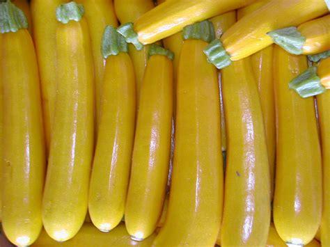 cuisine des balkans zucchini