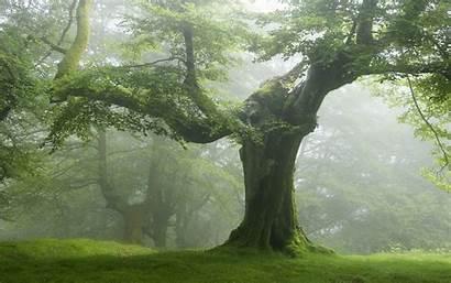 Trees Nature Forest Landscape Tree Resolution Desktop