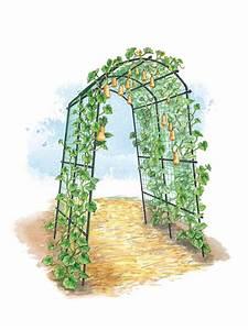 Titan Tunnel Trellis for Squash, Zucchini, Melons