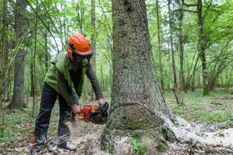 Double Trouble For Prized Polish Forest
