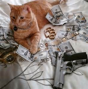 cat thug top 10 pictures of thug gangster cats