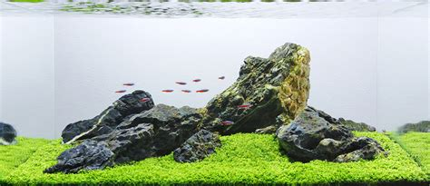 Iwagumi Aquascape by Aquascape Analysis Of George Farmer S One Pot Iwagumi